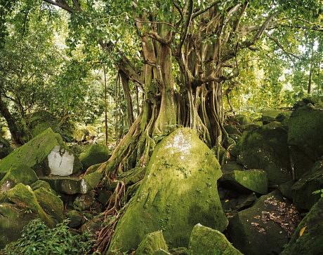 Guadeloupe : l'esprit guada